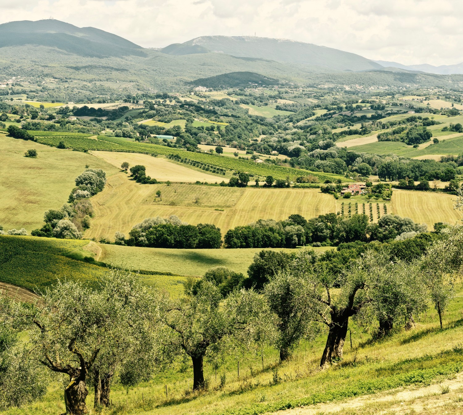 Mrs. McGarrigle's Culinary Tours to Umbria, Italy